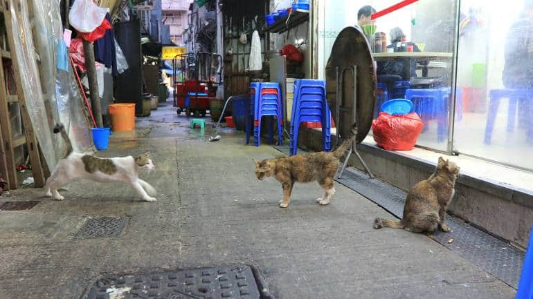 Cats looking at a Chinese restaurant